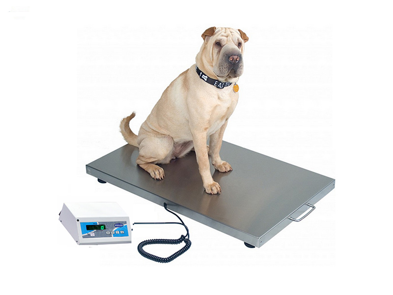 Dog Weighing Scales in Chennai, Tamil Nadu – India Dog Animal
