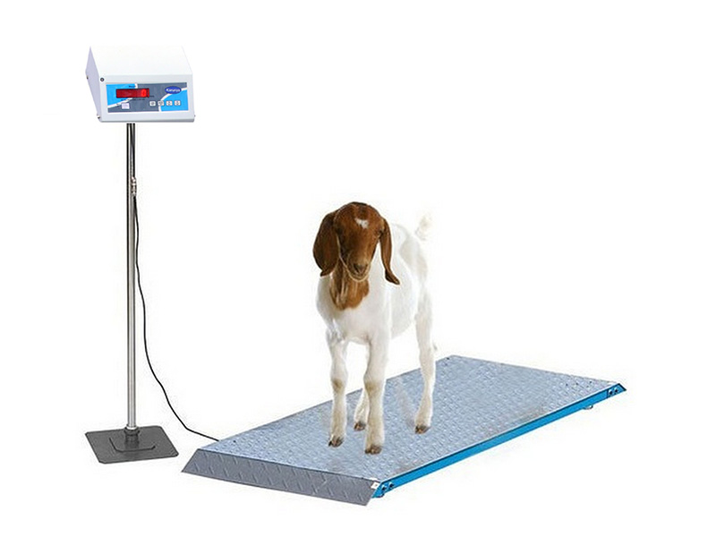 Goat Weighing Scales for Goat Farms in Chennai, Tamil Nadu