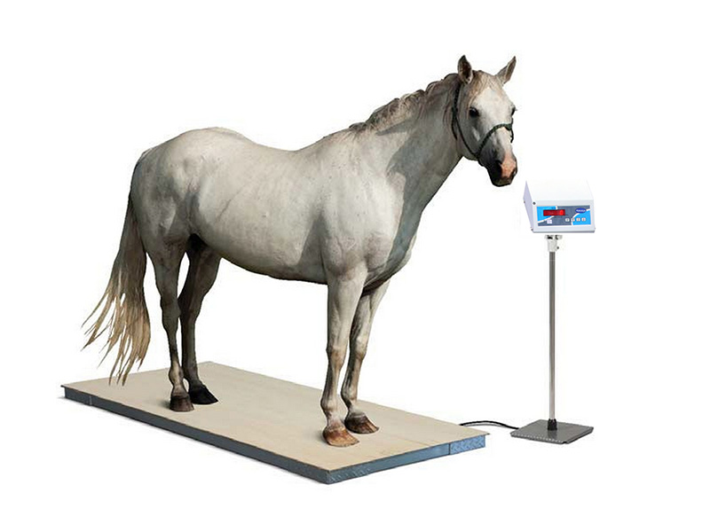 Horse and Equine Weighing Scales in Chennai, Tamil Nadu – India